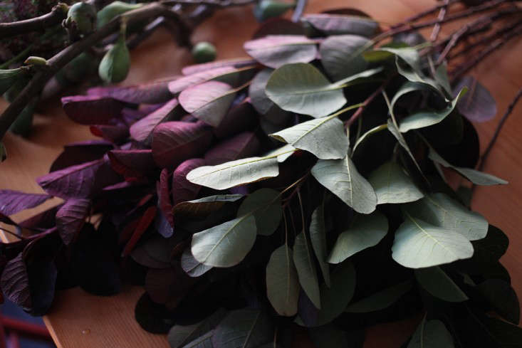 Sophia_Moreno_Bunge_Gardenista_Arrangement_Smokebush_Color