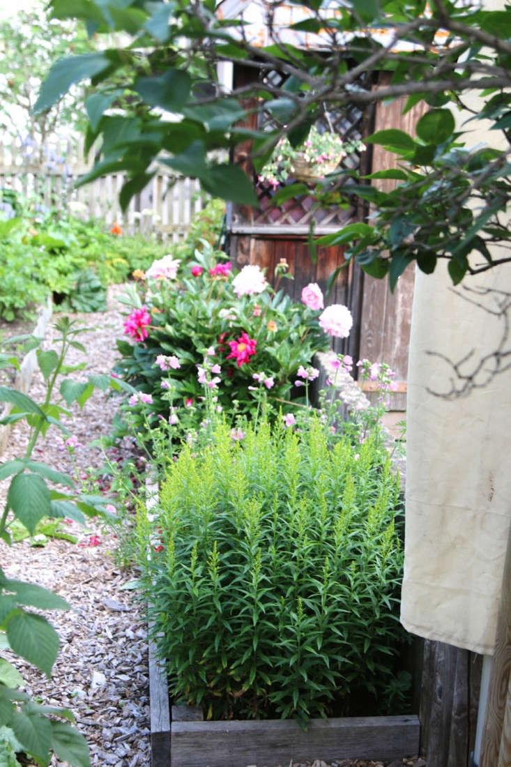 Swiss-Cottage-Edible-Garden-Gardenista-2