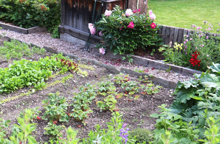 Swiss-Cottage-Edible-Garden-Gardenista-6