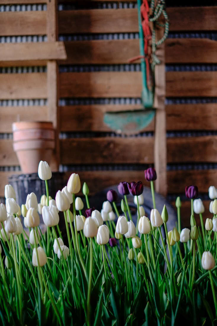 Tara-Douglas-wedding#8whitetulips-gardenista-SPMP-20140501-010
