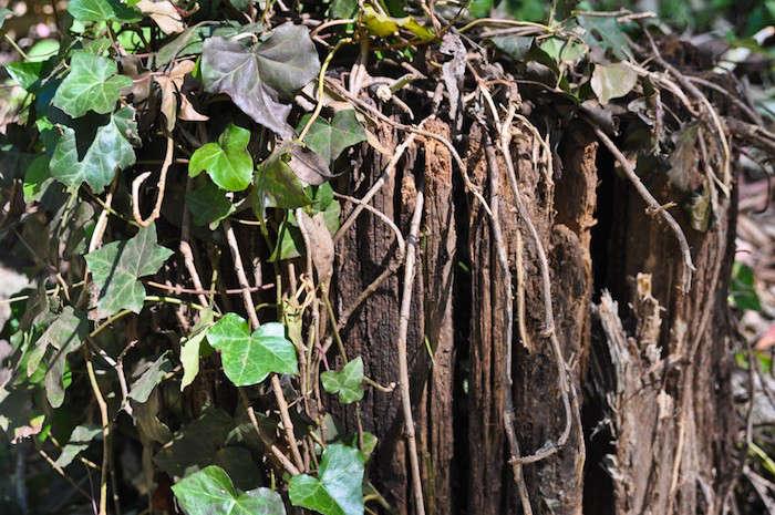 Tree-Stump-Janet-Hall-Gardenista-2