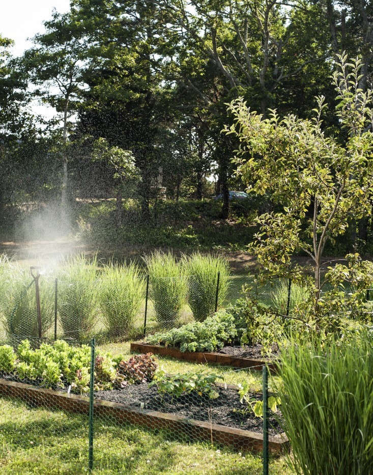 In her Cape Cod garden, architect Sheila Bonnell mixes vegetables and herbs. &#8