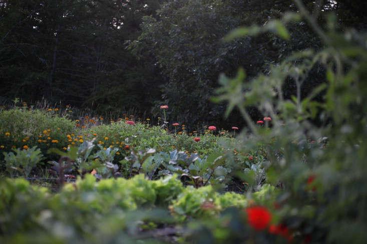 Worlds End Farm Sarah Ryhanen florist Saipua