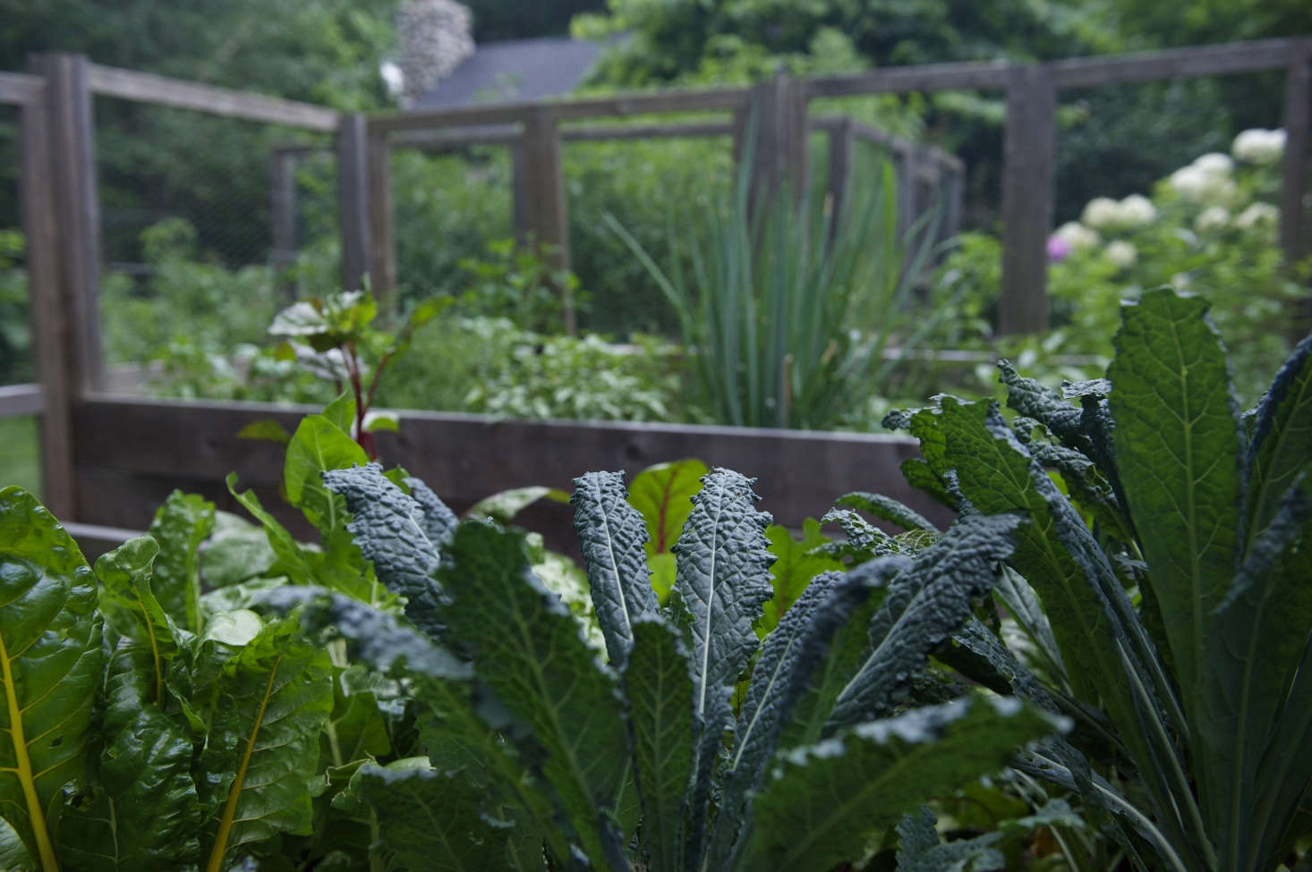 Deep green and textured, kale adds visual interest to Laura Silverman&#8