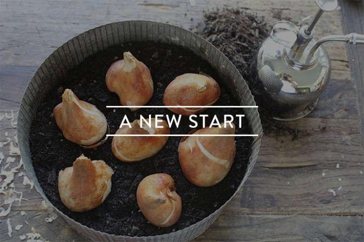 a-new-start-toc-gardenista