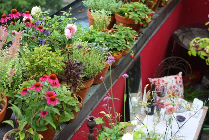 apartment-garden-ideas-to-steal-edible-garden-66-square-feet-marie-viljoen-gardenista