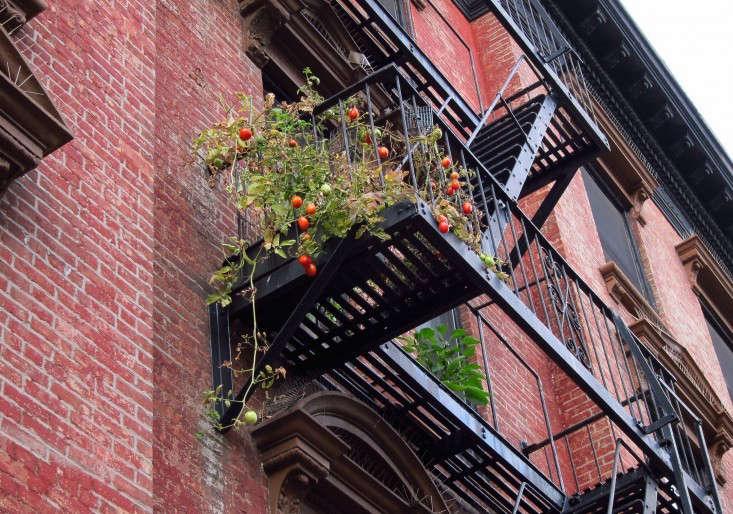 apartment-garden-ideas-to-steal-fire-escape-marie-viljoen-gardenista