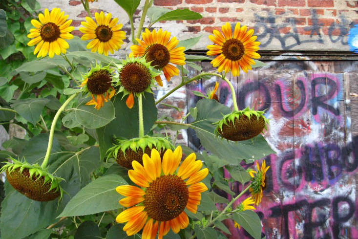 apartment-garden-ideas-to-steal-graffiti-flowers-marie-viljoen-gardenista