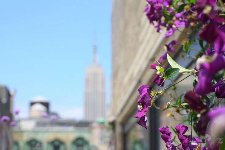 apartment-garden-ideas-to-steal-purple-clematis-marie-viljoen-gardenista