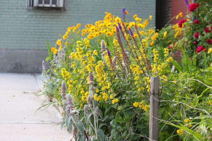 apartment-garden-ideas-to-steal-sidewalk-perennials-marie-viljoen-gardenista