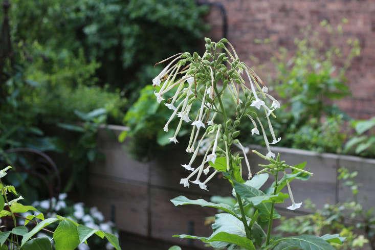 apartment-garden-ideas-to-steal-statuesque-plants-2-marie-viljoen-gardenista