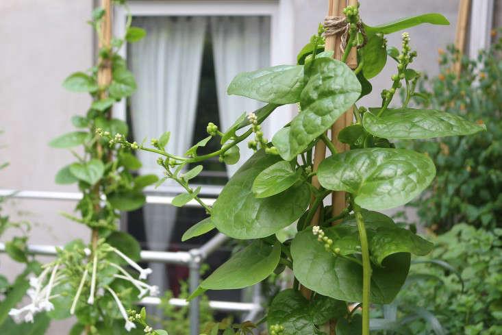 apartment-garden-ideas-to-steal-statuesque-plants-viljoen-gardenista