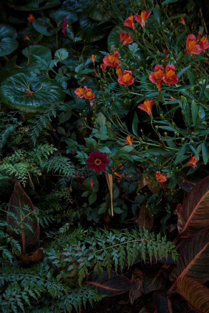 ayrlies-new-zealand-red-ferns-gardenista