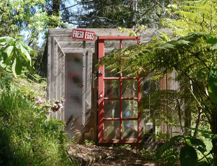 backyard-chicken-coop-chiquita-woodard-mill-valley-gardenista-2