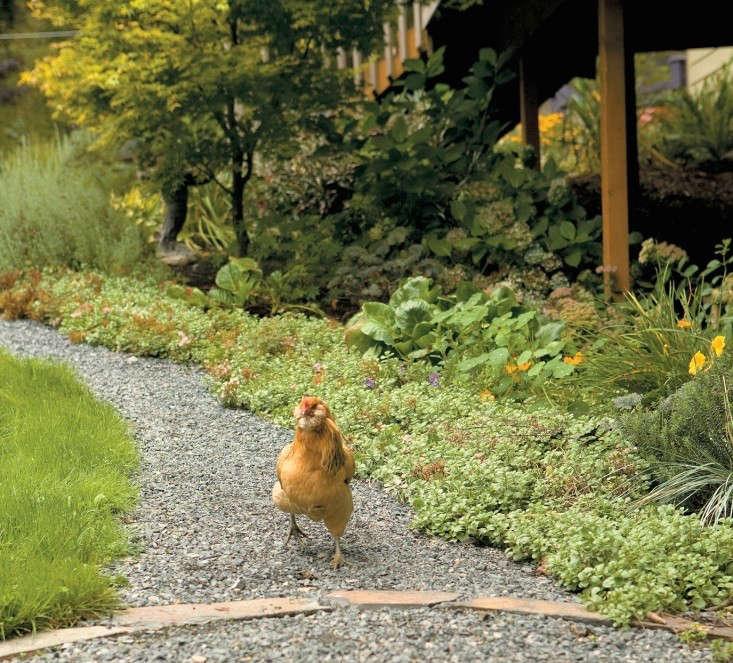 backyard-chicken-farm-gardenista