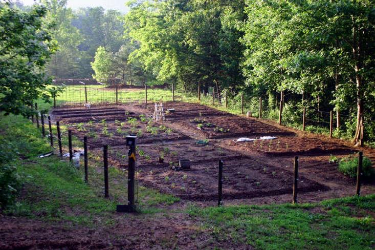 bean-tunnel-diy-vegetable-garden-1-gardenista