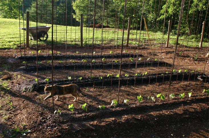 bean-tunnel-diy-vegetable-garden-3-gardenista