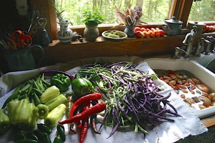bean-tunnel-diy-vegetable-garden-8-gardenista