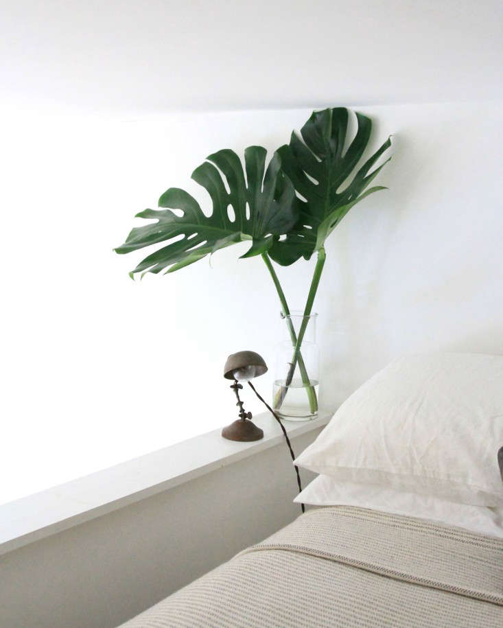 Monstera deliciosa plant by Bed, Photo by Erin Boyle