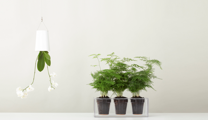 boskke-sky-planters-gardenista