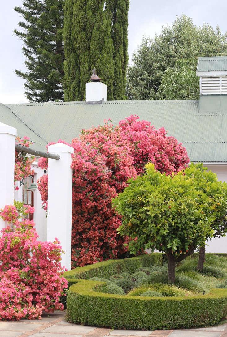 bougainvillea-Cellars-Hohenort-Marie-Viljoen-Gardenista