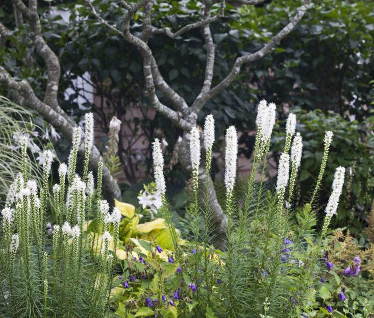 brewster-home-flowerbed-3