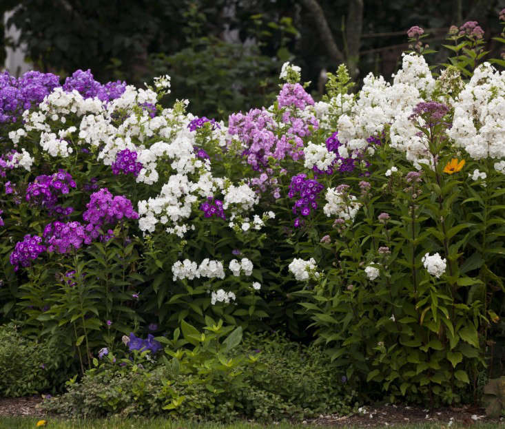 brewster-home-flowerbed