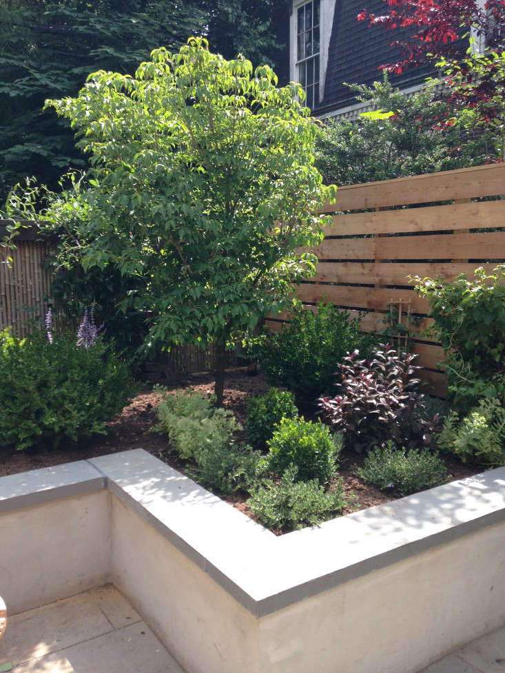 brooklyn-prospect-townhouse-garden-planting-bed-stucco-gardenista