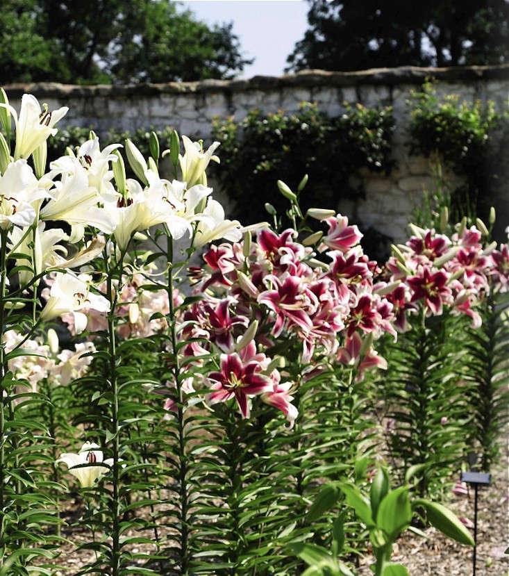 bunny-mellon-oak-spring-farms-garden-lilies-gardenista