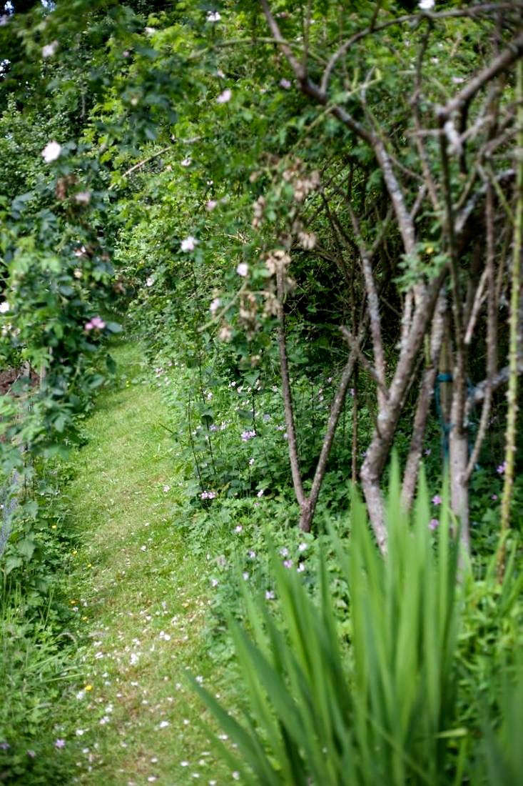 The garden of author Celia Lewis is made up of lawn and paths through the wooded areas and has been a large inspiration for her book, An Illustrated Country Year. Photograph by Emma Lewis, from A Reader&#8