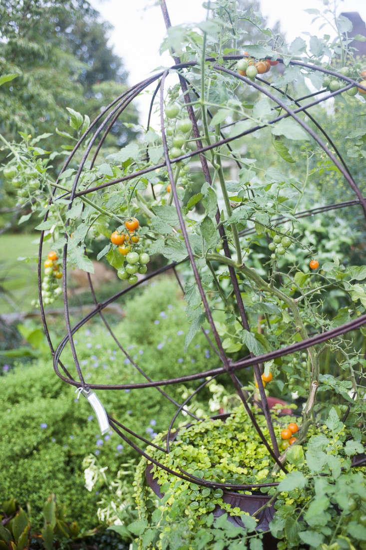 campo-de-fiori-9-rich-pomerantz-gardenista