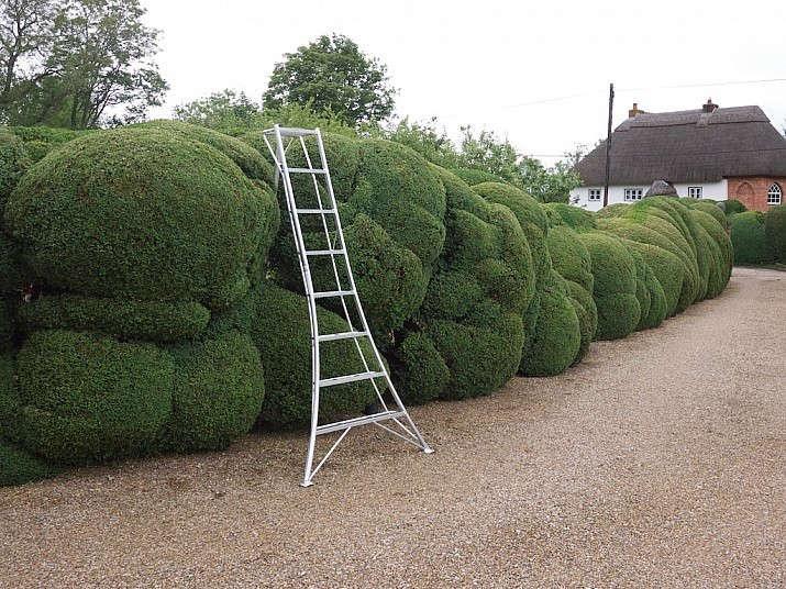 cloud-pruning-boxwood-gardenista
