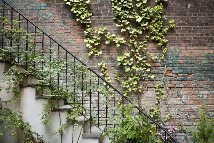 curb-appeal-ivy-growing-on-a-wall-gardenista