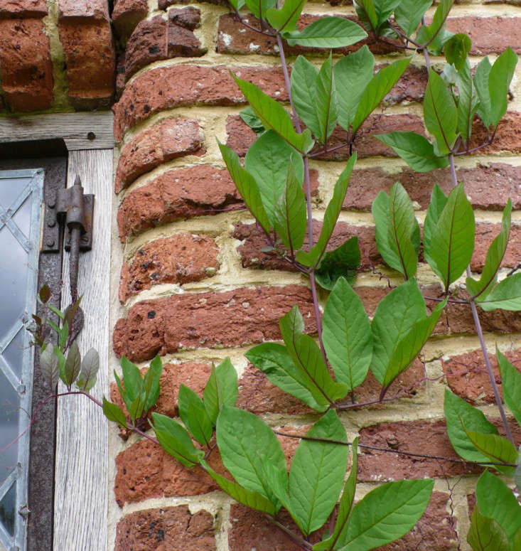 curved-wall-sissinghurst-castle-gardenista
