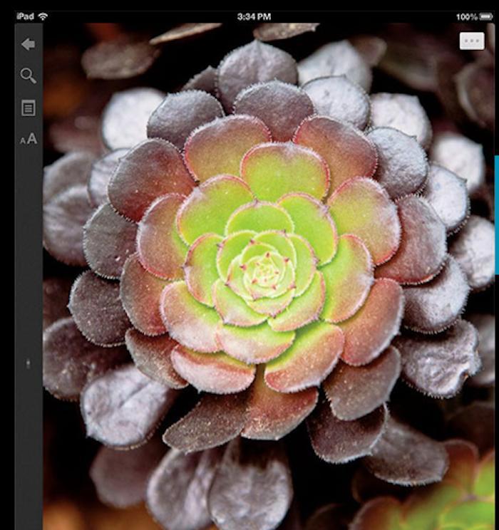 digital-version-sunset-gardening-book