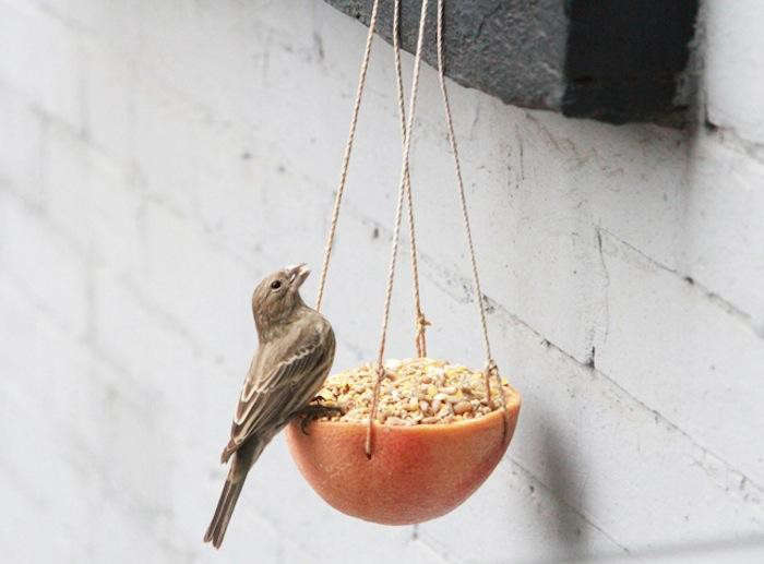 A DIY bird feeder made from a grapefruit half will lure feathered friends to the window—and give you something better to do with a grapefruit half than to throw it away. Photograph by Erin Boyle.