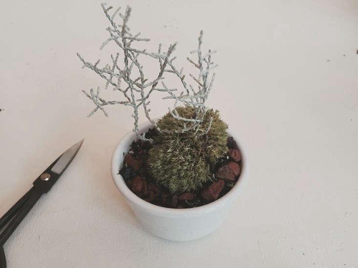 diy-modern-bonsai-cushion-bush-gardenista