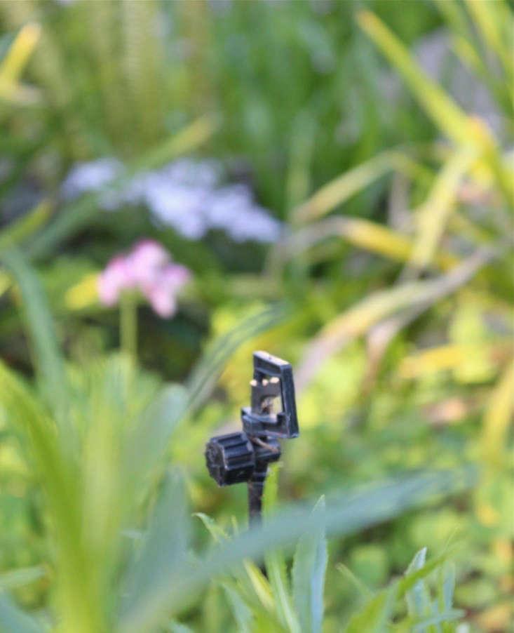 drip-irrigation-michelle-gardenista-3
