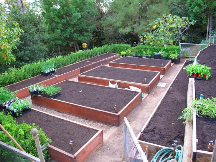 drip-irrigation-pam-rownak-gardenista
