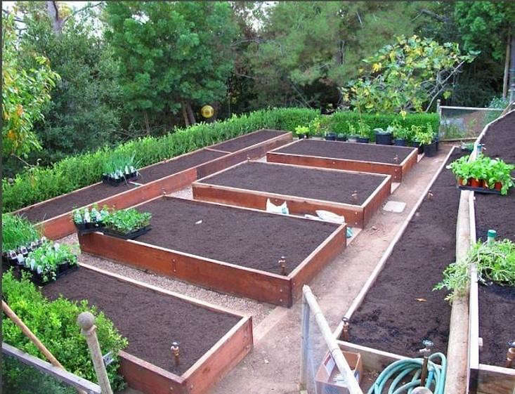 edible-garden-bed-layout-design-gardenista