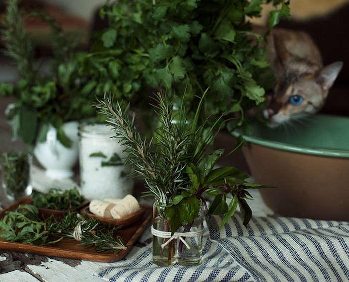 5 Beautiful Ways to Make Fresh Herbs Last Longer