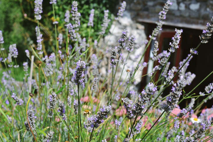 erica-vanhorn-garden-ireland-rincy-koshy-gardenista-10