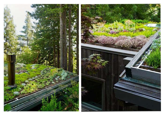 feldman-architecture-green-roof-mill-valley-3-gardenista