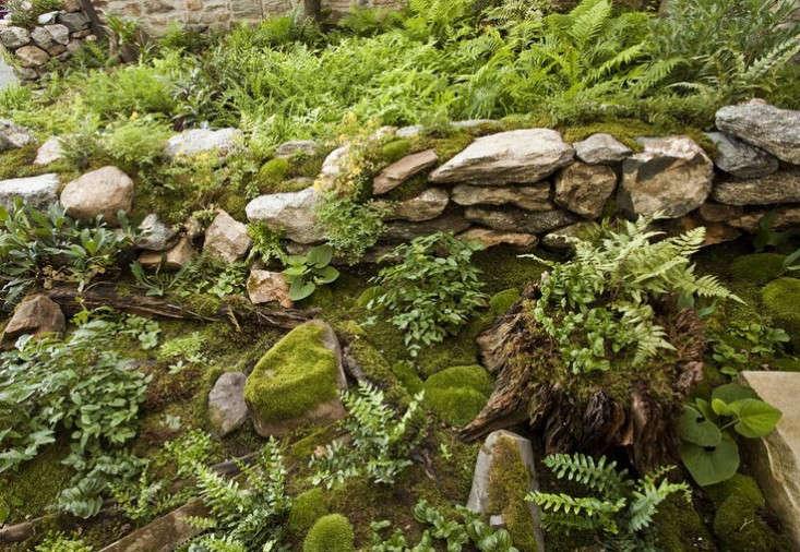 ferns-moss-garden-wall-gardenista