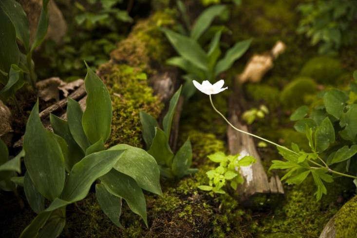 ferns-underfoot-gardenista
