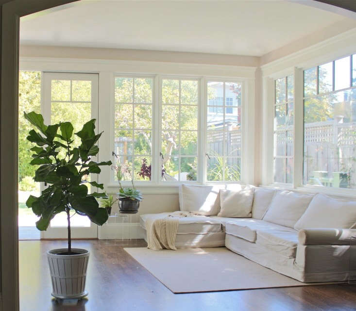 What your fiddle-leaf fig tree craves: bright, indirect sun, good air circulation, and well-draining soil.
