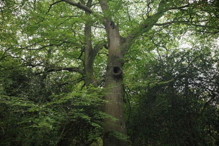 field-guide-beech-tree-owl-hole
