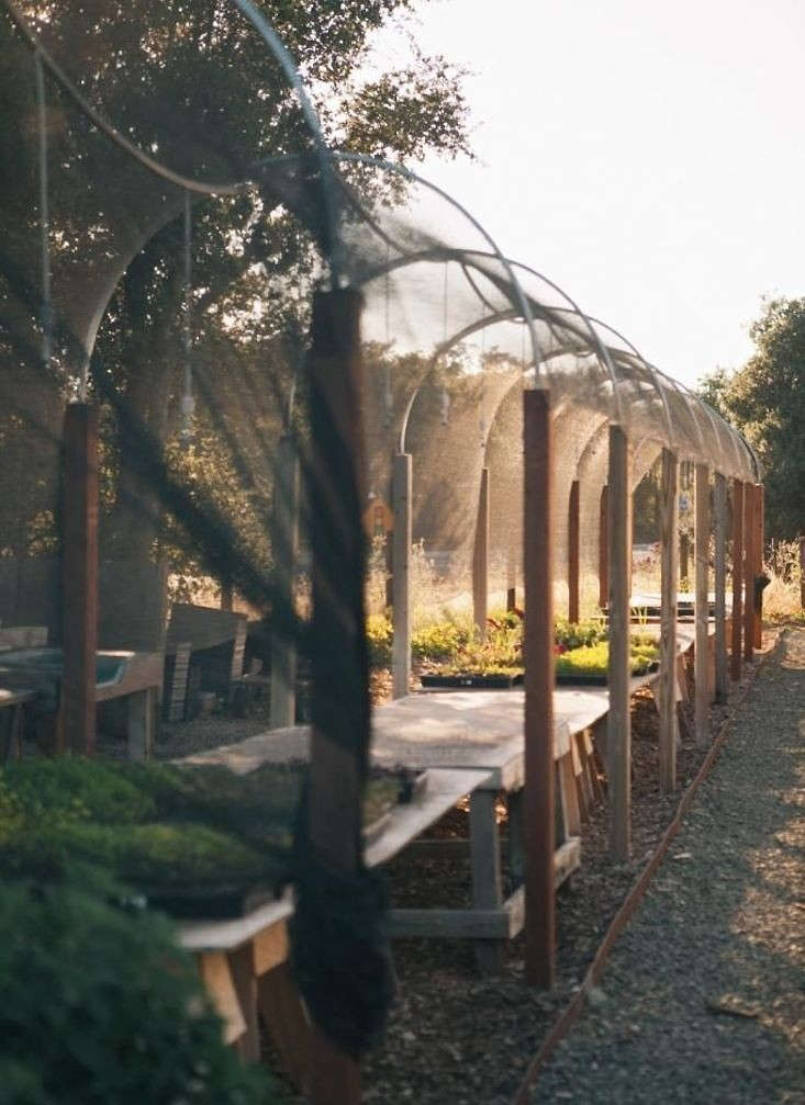 A hoop house protects tender seedlings from wind and birds in chef Thomas Keller&#8