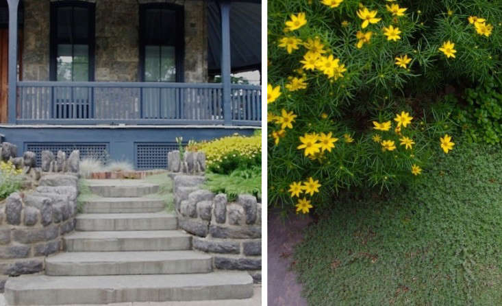 Hardy perennials including coreopsis (R) and thyme edge the walkway.
