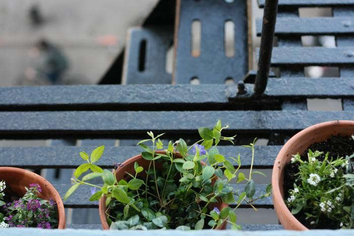 Photograph byErin BoylefromDIY: A Fire Escape-Style Garden.
